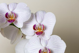 orchideen blüte Wellness