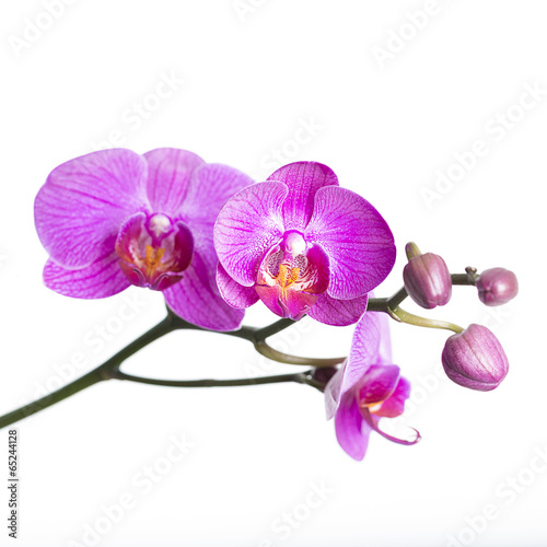 canvas print picture orchid  isolated on white