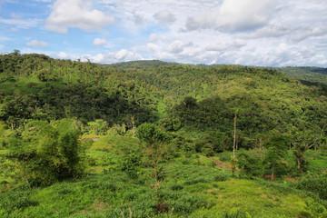 Landscape of ecuadorian jungle
