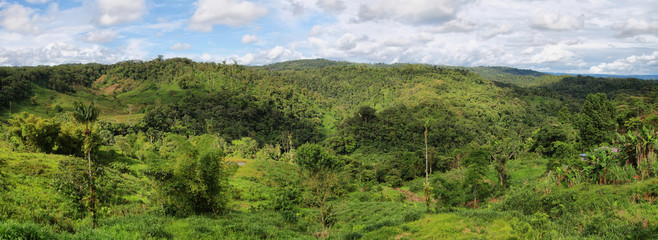 Landscape of ecuadorian jungle