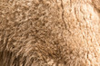 background of camel wool
