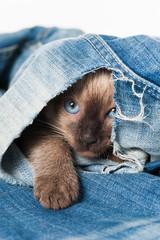 Kätzchen versteckt sich