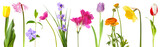 Fototapety Fresh spring flowers isolated on white