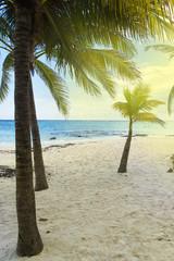 A tropical beach in Tulum