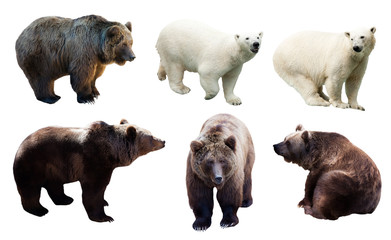 Set of polar and brown bears