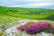 canvas print picture - cornwall england