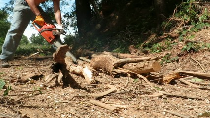 worker with chainsaw in the woods