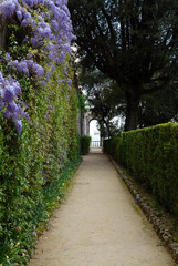 footpath trough hedge