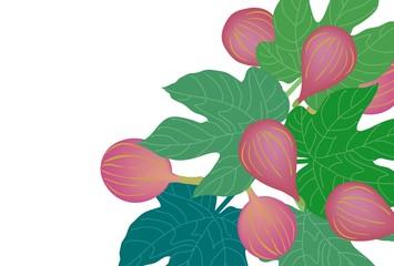 イチジクの実と葉のシンプルなカット