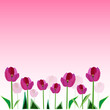 Tulip blossom vector background