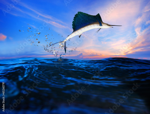 Fototapeta sailfish flying over blue sea ocean