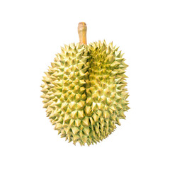 durian; fruit; isolated; weird; tree; thailand; ripe; delicious;