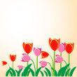 Tulip vector background