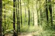 canvas print picture - Waldweg Mit Sonnenstrahlen