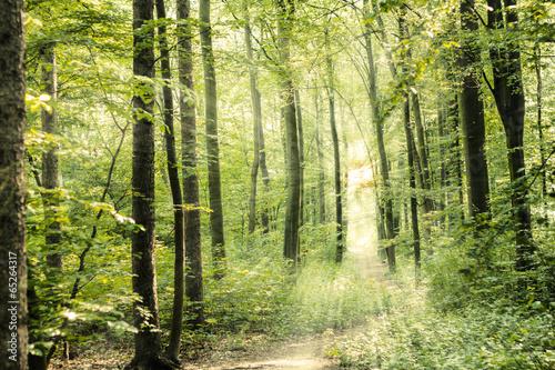 canvas print picture Waldweg Mit Sonnenstrahlen