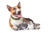 happy dog with kittens - 65265106