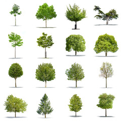 Pack of green trees on a white background in high definition