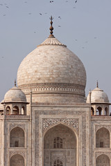 Birds circling the central dome of the Taj Mahal, Agra