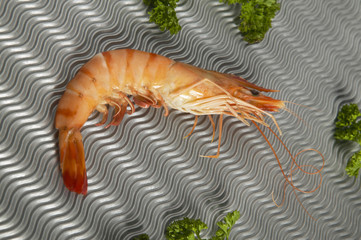 Coocked shrimp on a metallic background