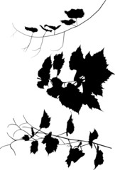three black vine silhouettes on white