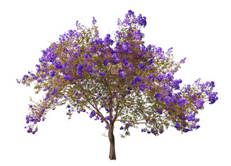 blooming blue tree isolated on white