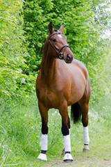 Pferd in der Natur