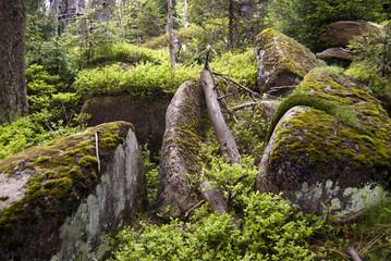 Wald Steine