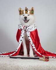 akita royal
