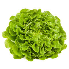 Kopfsalat liegend - quadratisch
