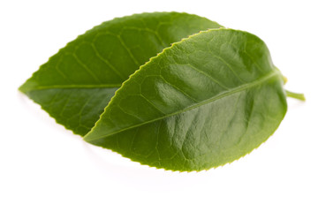 fresh tea leaves isoalted on the white background