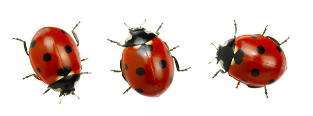 Collection of ladybugs