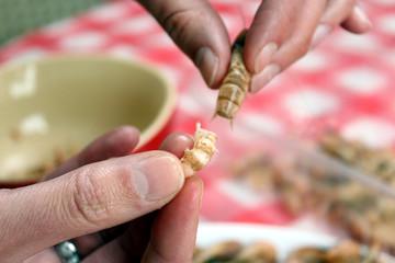 Krabbe wird per Hand gepult Detail