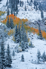 Snow Covered maroon bells Mountains with Golden Aspen Trees