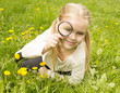 girl considers dandelions flower through a magnifying glass