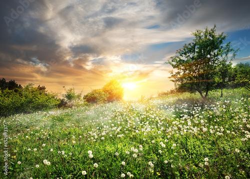 Poster Heuvel Sunrise over dandelions