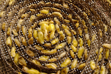 Silk worms nest in bamboo basket