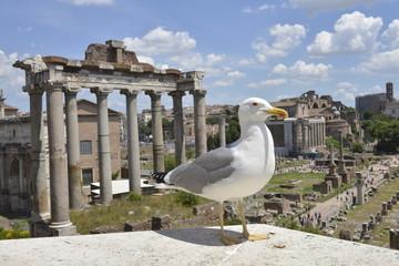Gabbiano a Roma, Fori Imperiali