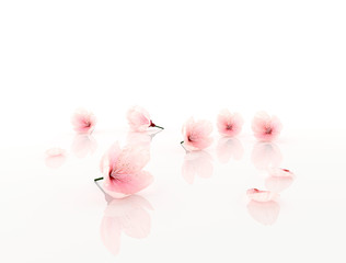 pink flowers isolated on white