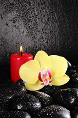 candle Orchid Pebbles background