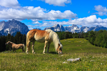 Horses on the mountain pasture on Vosca in Karavanke range