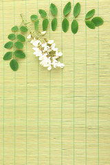 Acacia flowers on bamboo mat background