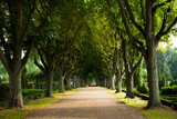 Fototapety Alley of trees on the graveyard, Lund, Sweden