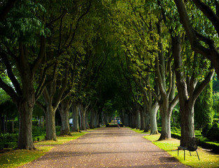 Alley of trees on the graveyard, Lund, Sweden