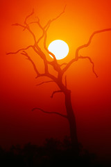 Dead Tree silhouette and glowing sun
