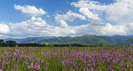 Summer scenery in the Alps and beautiful meadows