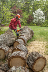 Cutting tree trunk with a chainsaw