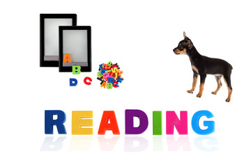 Toy-terrier puppy with electronic book on white background.