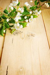 Branch of apple tree with blooming flowers on the wooden board