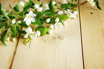 Branch of apple tree with blooming flowers on wooden planks