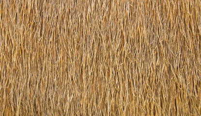 Dry straw. Background or Texture